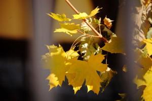 Осенние ожидания