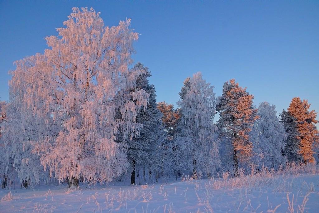 zolotoj-sneg
