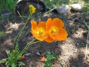 Оранжевые чудеса